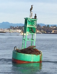 Everett Marina Buoy