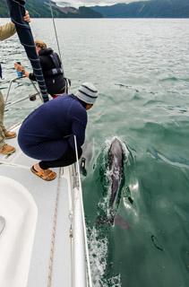 dolphin_irene
